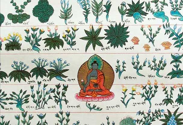 Medicijn Boeddha met helende planten