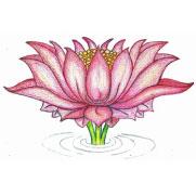 De Lotus, symbool van de spirituele weg naar verlichting