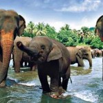 Sri Lanka Boeddhisme cursus